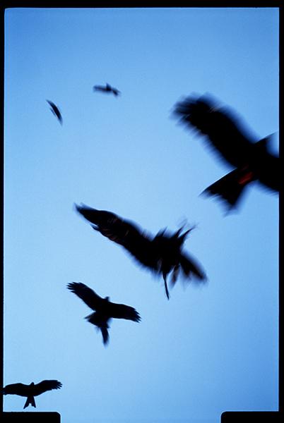 Varanasi..Birds