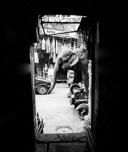 Pahaganj...New Delhi. photo copyright : Russell Shakespeare