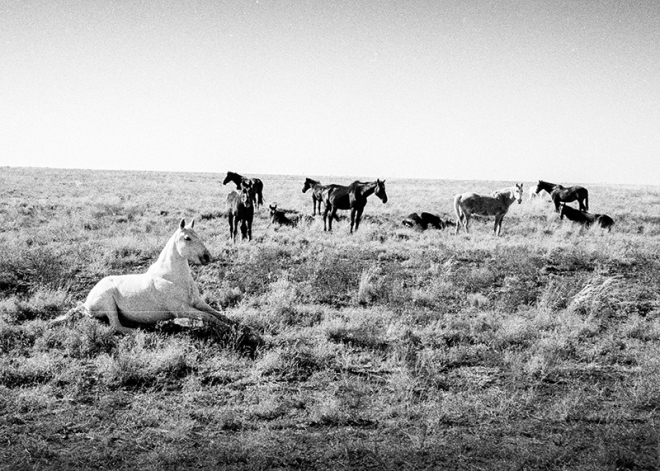 Horses, Longreach, Queensland, Australia. photo copyright : Russell Shakespeare