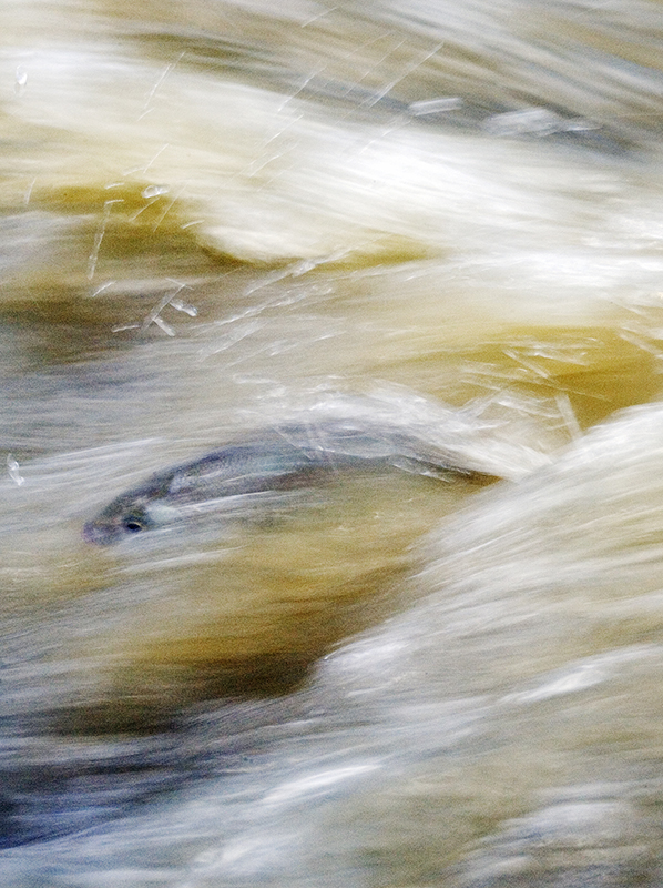 """Fish"", Queensland, Australia. [hoto copyright : Russell Shakespeare"
