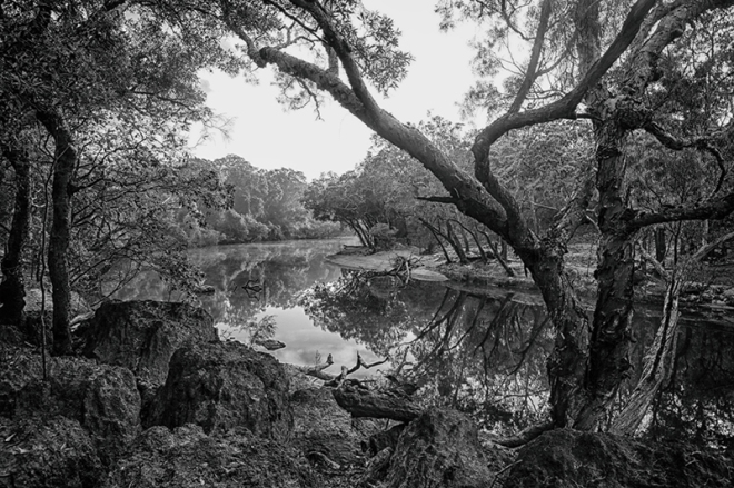 """The Wenlock River flowing through the """"Steve Irwin Wildlife Reserve"""" Cape York. photo copyright : Russell Shakespeare"""
